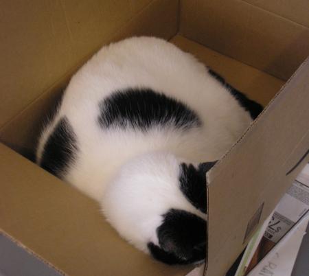 Amazon Cat 2