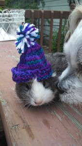 Knit Piggy Hat